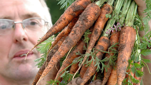 farmer with newly harvested carrots