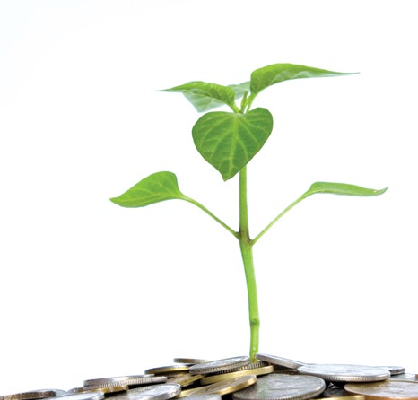 Plant growing out of money pile