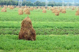 Haystacks in Romania