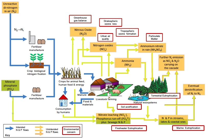 Flows of nitrogen and phosphorus