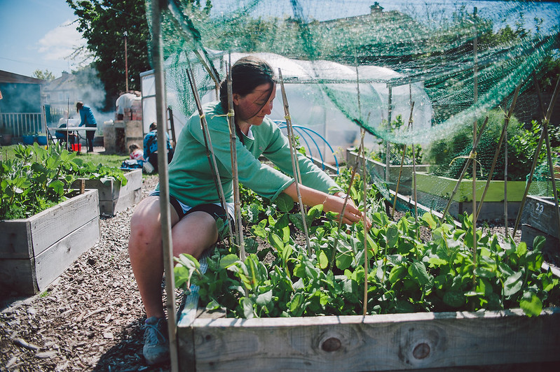 Energy, green spaces, and local food